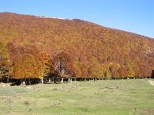 Campo Ceraso