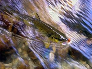 Pesca a mosca